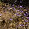 Lavender palette