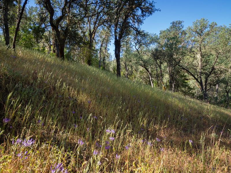 Blooming hillside