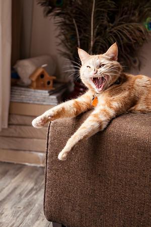 Tat's Yawn