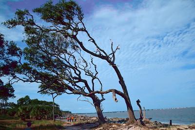 Jekyll_Island_Day2_2015_5