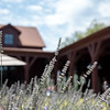 Vintner's Luncheon at Tamber Bey Vineyards