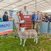 Border Livestock Kelso Ram Sales 2015