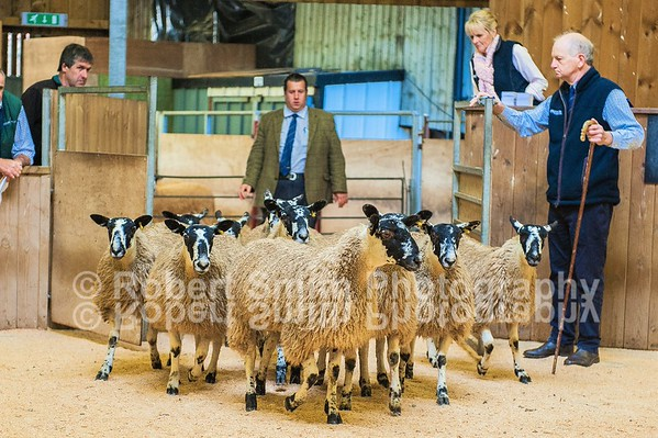 "Hexham Mart ""Tow Law"" Mule Ewe Lamb Show and Sale - September 24th 2015"