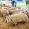 J A & R Geldard & Sons, Low Foulshaw Farm