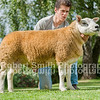 (lot 534) sold for 7000 gns from J & G Y Davies - Aman Watcyn Win