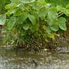MET 070715 FLOODED BEANS