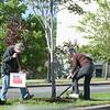 JOED VIERA/STAFF PHOTOGRAPHER-Lockport, NY-Volunteers Sue Crosby and Mary Ragland plant flowers along Main Street's median Wednesday, May 20, 2015.