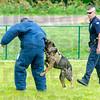 MET 060615 AXEL DOG