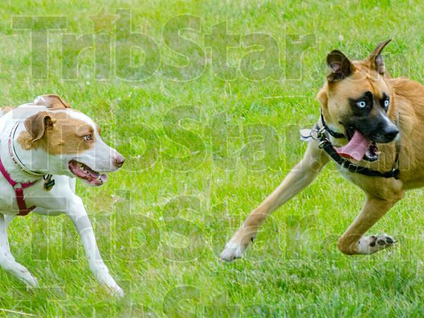 MET 060615 DOG FRIENDS