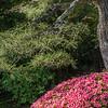 Day 10 Wed Murin-An, Ikebana