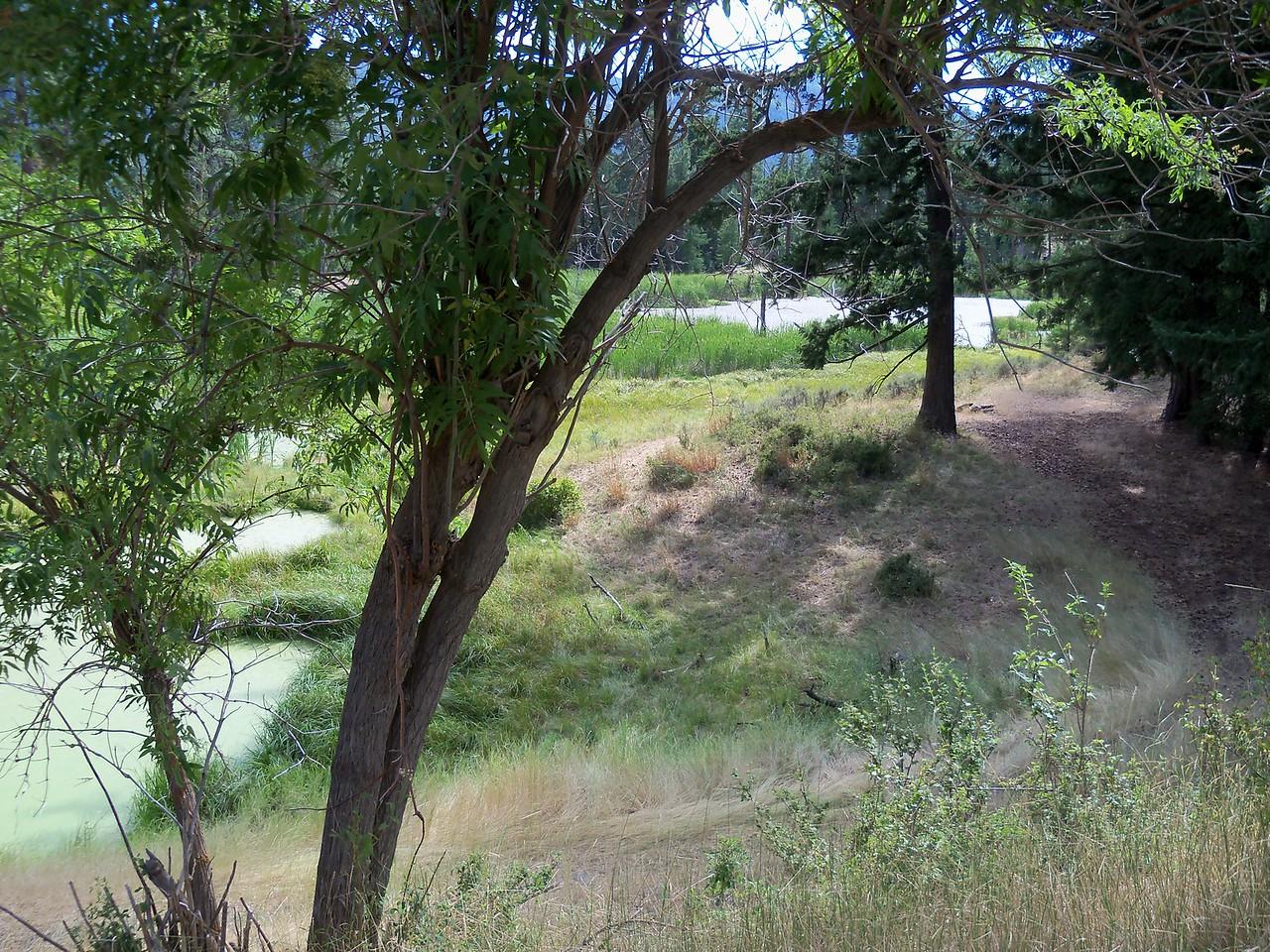 a green pond on FS 1503 rd
