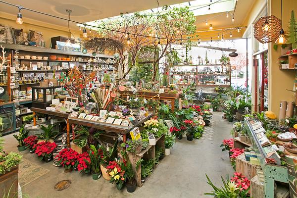 Flowerland-Dec2015-15-7874