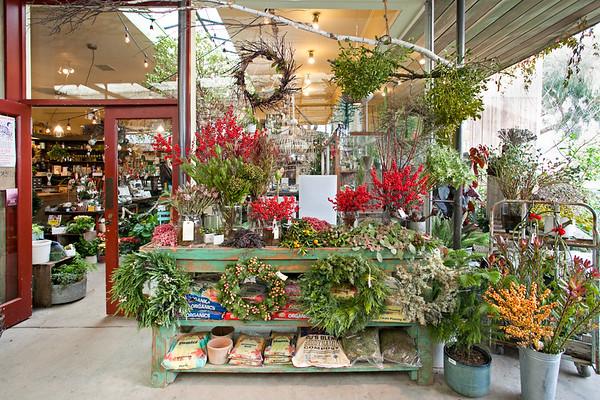 Flowerland-Dec2015-7-7899