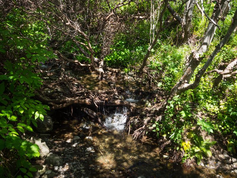 Sheltered stream
