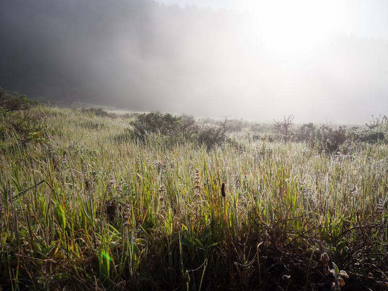 Thin fog