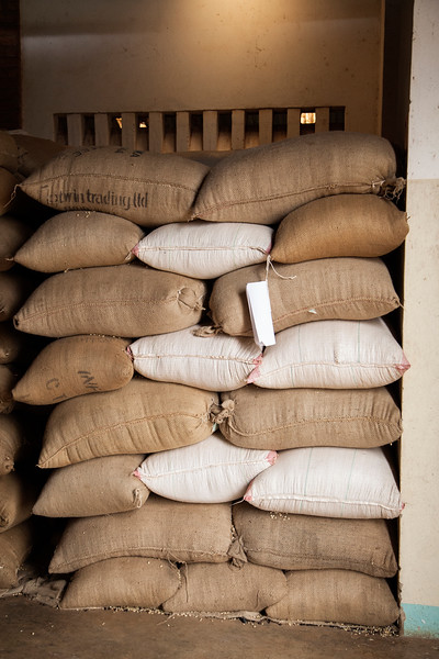 Piles of coffee beans fresh from the farms sit in stacks, waiting to move into the processing in this facility.