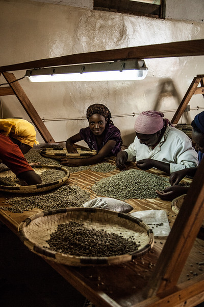 This room was remarkable - this is where some eighty or so women work all day sorting the good whole coffee beans from the debris and broken beans, by hand.