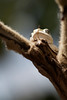 A small frog rests in the direct sunlight in a tree branch.