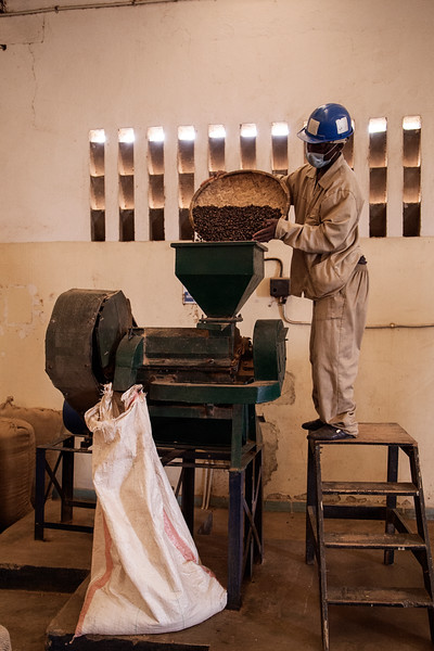 A worker loads beans into a huller, a machine that removes the shells from around the beans themselves.