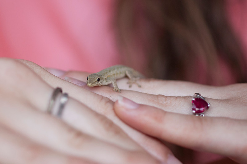 A small gecko lent us some mild entertainment, crawling around between interested people for a while.