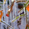 Ice Sculptures dsc_6766