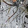 Ice Sculptures dsc_6764
