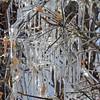 Ice Sculptures dsc_6765