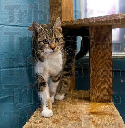 MET 030415 CAT
