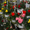 JOED VIERA/STAFF PHOTOGRAPHER-Lockport, NY- Flowers for sale at Faery's on Transit Road make a perfect mothers day gift.