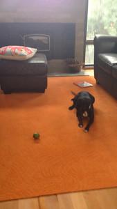 Poppy versus the lime