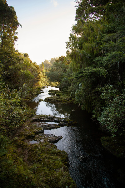 Waihoanga Creek flows away as we cross from pasture into protected forest to begin our exploration of the woods in this part of the world.
