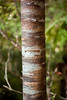 Wildly varied bark patterns adorn this tree and others like it in this forest filled with natural wonders.