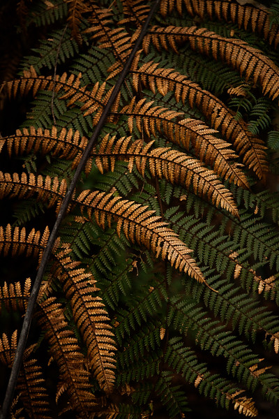 The old and the new - a dead fern frond rests against the backdrop of a living one alongside the trail.