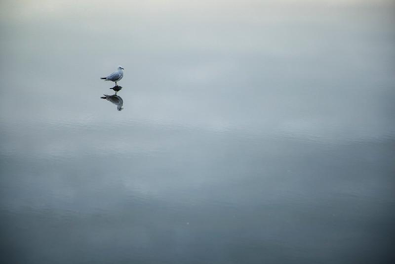 A lone seagull sits in a tidal pool at the beach near Whatipu.