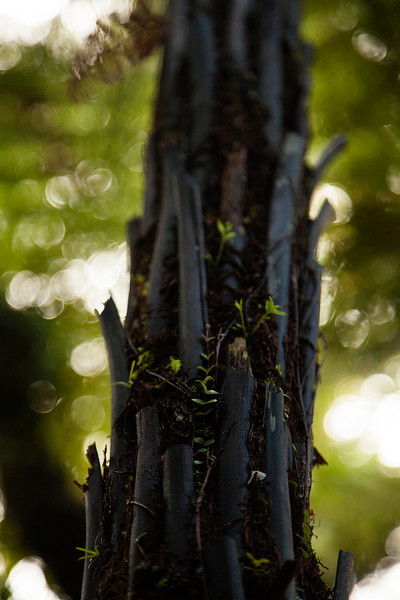 The trunk of a fern supports a few other forms of life, even as the fronds fall off and the fern grows higher above.