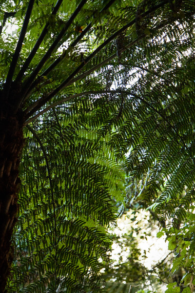 Tall ferns fill the forest, blocking most of the light from overhead and leaving the undergrowth relatively thin.