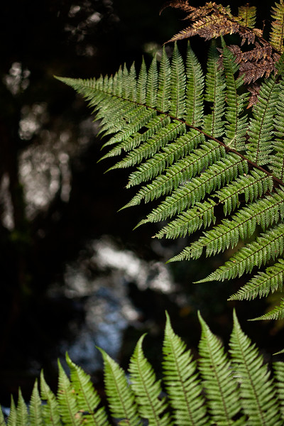Fern fronds overlook the water of a small creek as it flows through the forest.