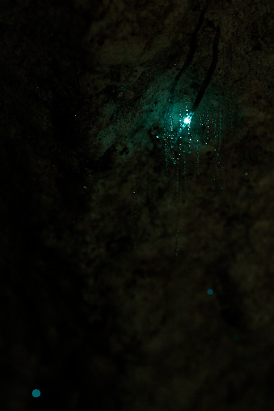 Some new friends guided us to a small cave for some viewing of glow worms, which are common across New Zealand. We did our best to grab some photos.
