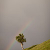 A small tree stands under a rainbow on the trail back to the car.