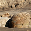 The Moeraki Boulders are a fascinating bundle of geological oddities piled on a small section of beach.