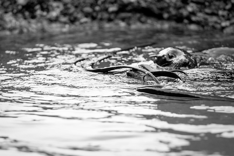 We came across a happy group of young seals playing in the pools, and sat with them for a while, photographing their antics.