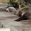 Seals lounge peacefully on the beach at the Kaikoura Peninsula.