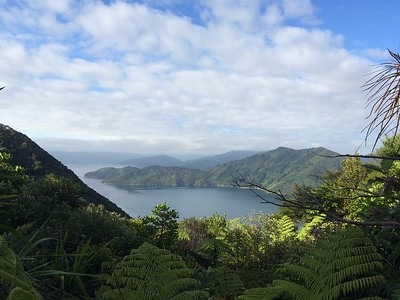 New Zealand - Katie Stellato