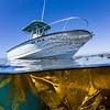 Boat chills out in La Jolla kelp