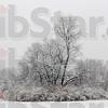 MET 112115 SNOW TREE