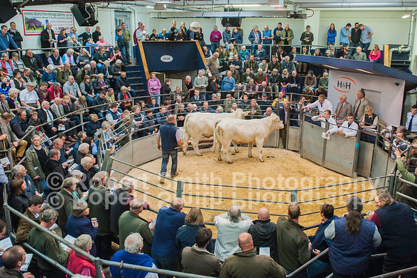 Edenhurst Dispersal Sale of Pedigree Charolais Cattle - 3/10/15