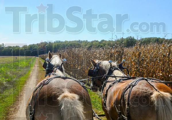 MET 100415 HORSES