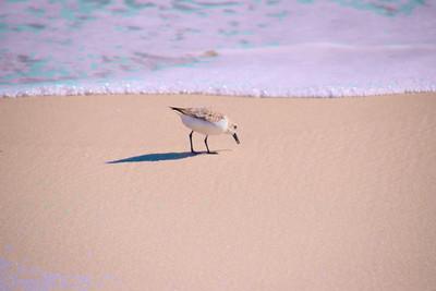 Pensacola_Beach_2015_1