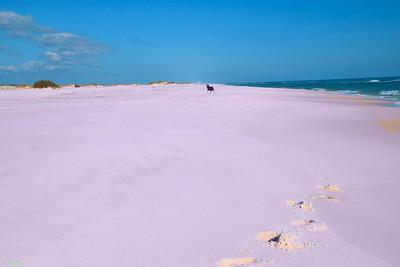 Pensacola_Beach_2015_7