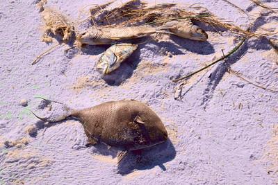Pensacola_Beach_2015_11